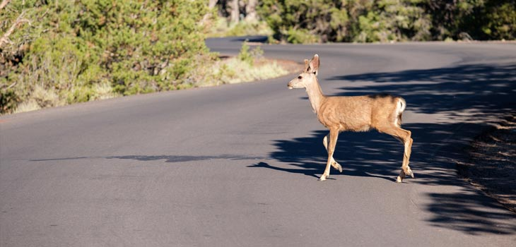 Don't Rely on Deer Crossing's To Keep You Safe!
